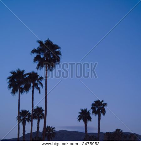 Palm Trees At Dusk