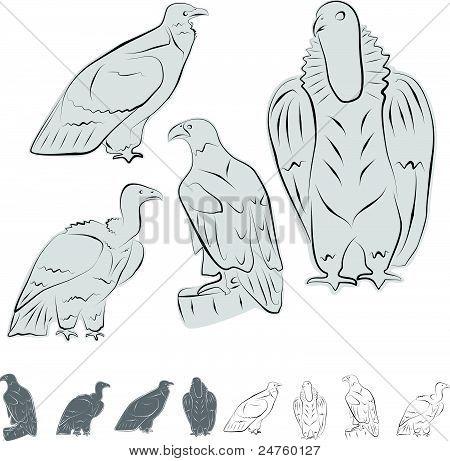 Eagles Build