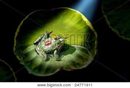 Prince Frog In The Spotlight