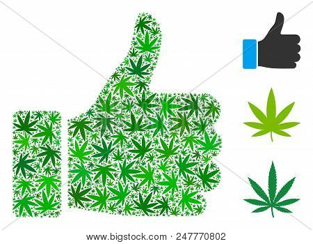 Thumb Up Composition Of Hemp