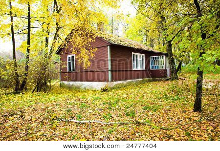house in wood (autumn)