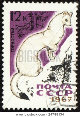 Ermine On Post Stamp