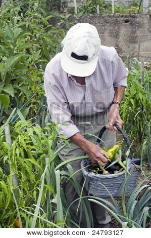 Senior Man Working In A Garden
