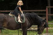 Equine Therapy, Recreation Concept. Child Sit In Rider Saddle On Animal Back. Girl Ride On Horse On  poster