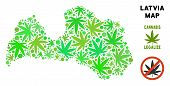 Royalty Free Marijuana Latvia Map Mosaic Of Weed Leaves. Concept For Narcotic Addiction Campaign Aga poster