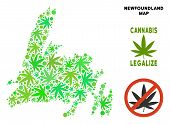 Royalty Free Cannabis Newfoundland Island Map Collage Of Weed Leaves. Template For Narcotic Addictio poster