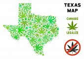 Royalty Free Cannabis Texas Map Composition Of Weed Leaves. Concept For Narcotic Addiction Campaign  poster