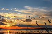 Seagulls Flying Over The Waskesiu Lake poster