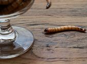 A Super Worm And Group Of Super Worms Inside Small Brandy Glass Over Dark Wooden Surface Used As Bac poster