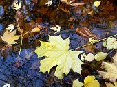 Autumn, Reflection In The Water Of Fallen Leaves, Branches Of A Tree, The Sky. Texture Of Water With poster