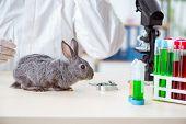Scientist doing testing on animals rabbit poster