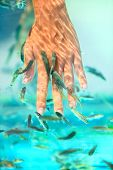 Manicure fish spa beauty treatment. Hand and finger skin care treatment in water with the fish rufa
