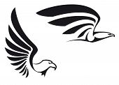 image of hawks  - Black eagles isolated on white background for mascot or emblem design - JPG