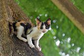 Calico Kitten Cat Catch On Tree, Cute Kitten Cat, Little Kitten Cat, Cute Pussycat, Calico Pussycat, poster