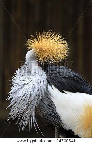 Retrato coronado grúa