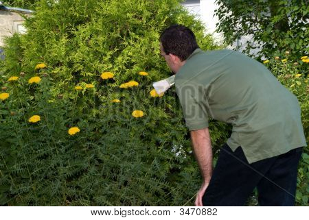 Gardener Cleaning His Flowers