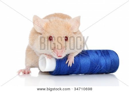 Decorative Mouse