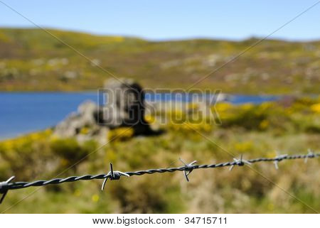 Wire with spring landscape behind