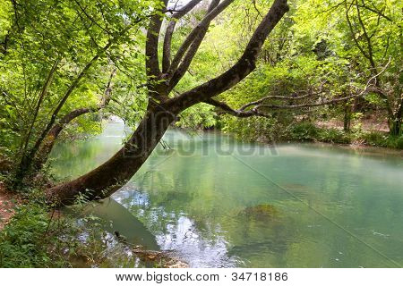 tree over river in deep forest