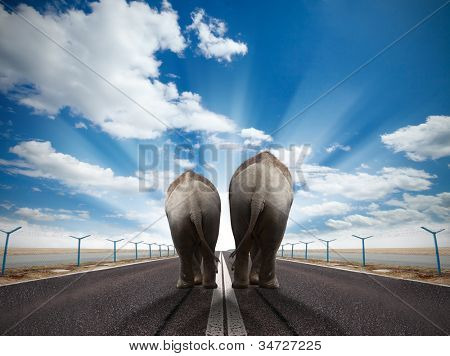 Two elephants walking on runway with sunny sky