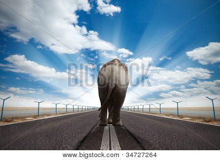 Elephant walking on runway with sunny sky