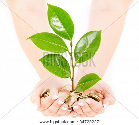Woman hands holding coins and plant over white background