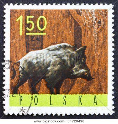 Postage stamp Poland 1965 Wild Boar