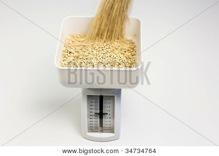 Measuring Barley