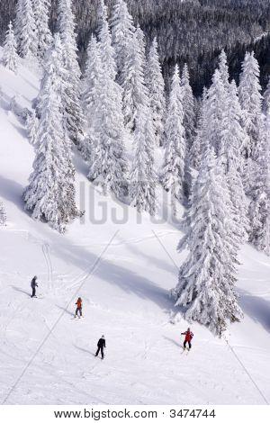 People Skiing On Jahorina, Republika Srpska, Bosnia And Herzegovina