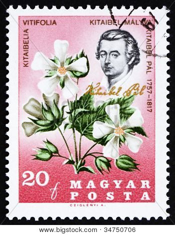 Postage stamp Hungary 1967 Pal Kitaibel and Kitaibelia Vitifolia