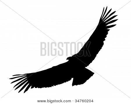 silhouette of condor