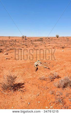 australian red desert