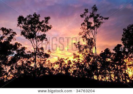 Australian sunrise with gum trees silhouette