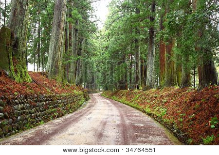 Cedar Avenue Of Nikko