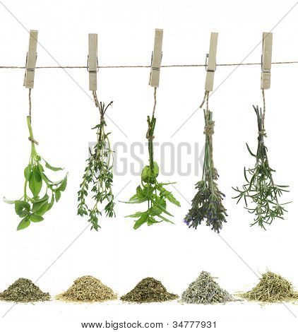 Fresh herbs hanging on a rope