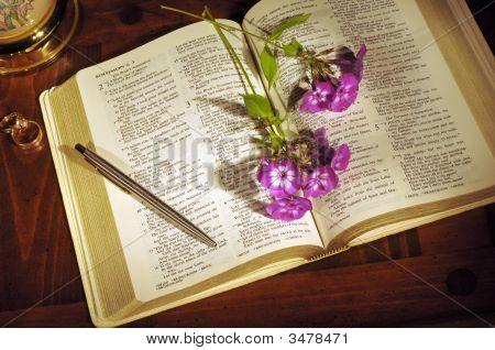 Bodegón de la Biblia