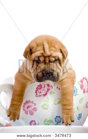 Shar Pei Baby Dog In A Large Cup