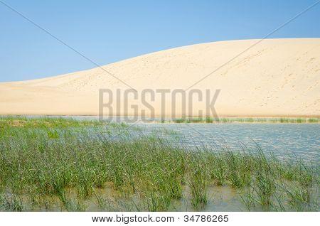 Dunes at Jockey's Ridge State Park