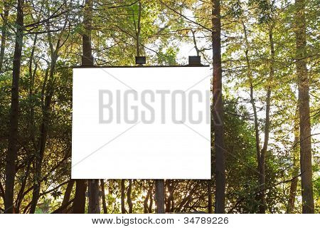 Projection Board In The Woods