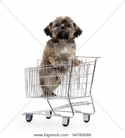 Shih Tzu Puppy In Shopping Card