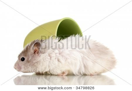 Cute hamster in cup isolated white