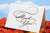 stock photo of thank you card  - Thank you card on leaves  - JPG