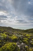 stock photo of fynbos  - View over fynbos plantations of cottage at the ocean - JPG