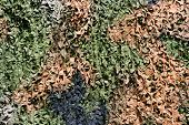 stock photo of camoflage  - a multi color leaf camouflage net background - JPG