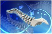 foto of coccyx pain  - Digital illustration of human spine in colour background - JPG