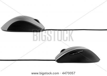 The Computer Mouse Profile View