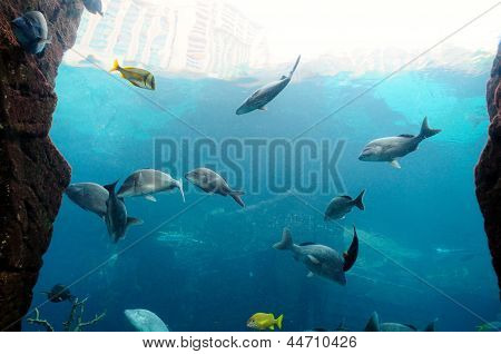 Fishes Swimming