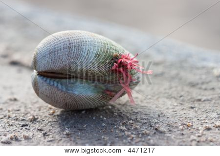 Clam Shell With Red Plant Growing On It