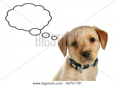 Little dog puppy is thinking about