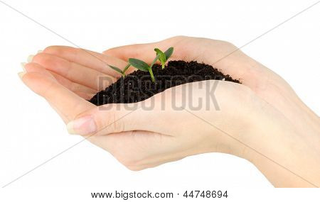 Green seedling growing from soil in hands
